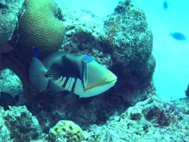 http://www.acetomato.jp/fish_etc/big/PB054313.jpg